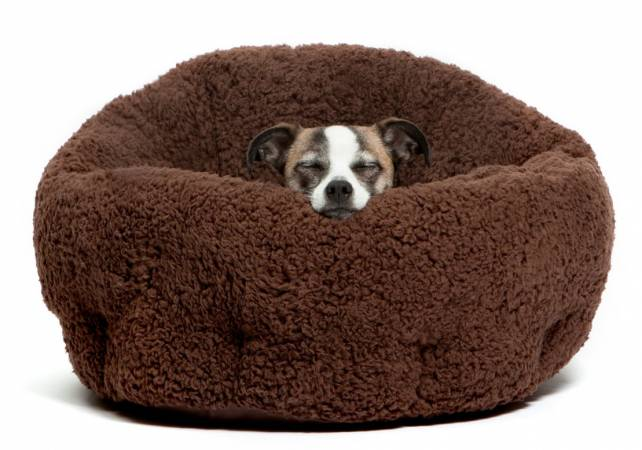 Ultimate guide on choosing one of the best dog beds available on the market.